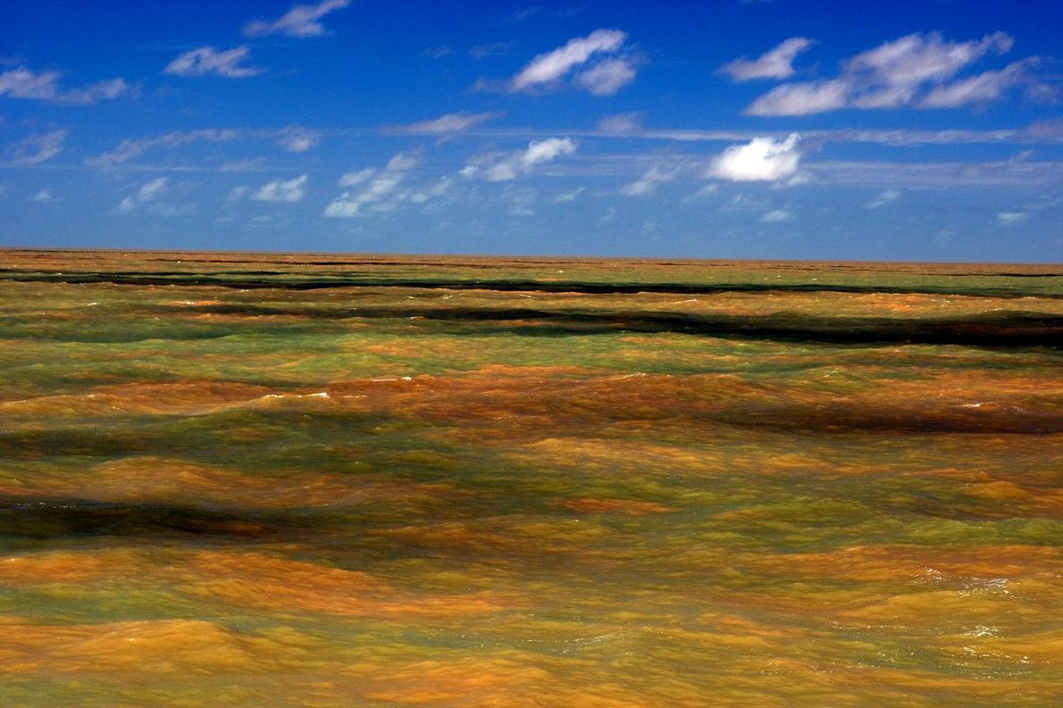 Amazon reef discovered. Photo Lance Willis news.nationalgeographic.com