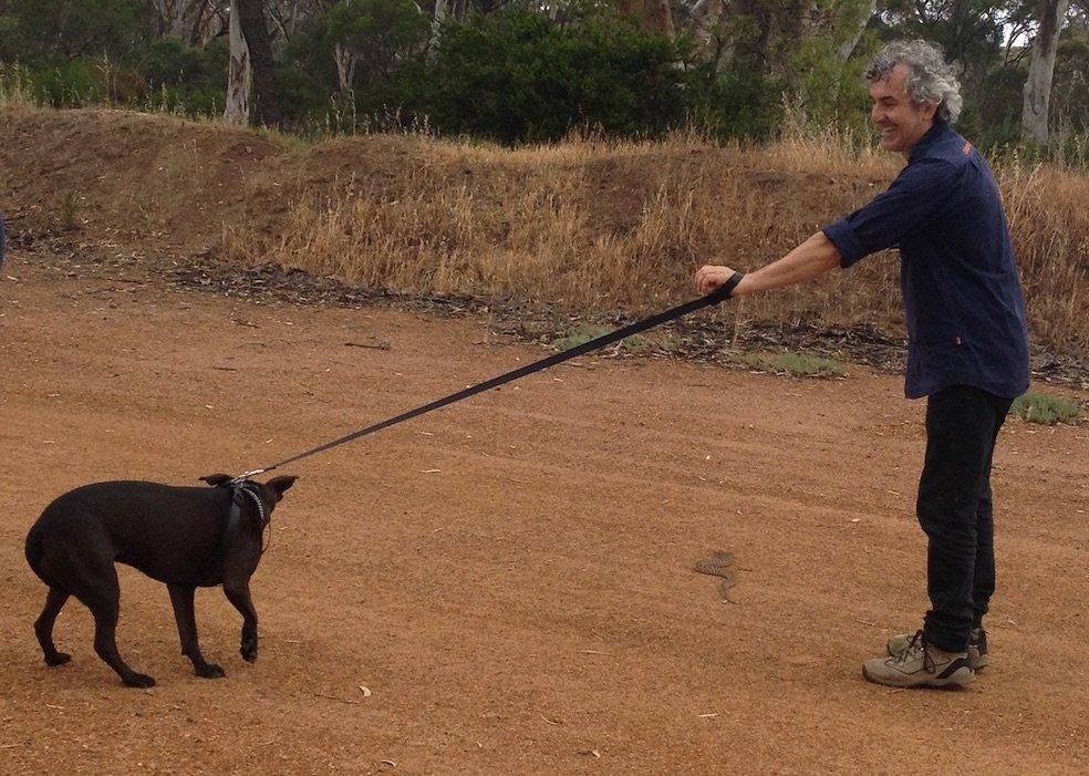 David Manning of Animal Ark condcuts snake avoidance training. Staffy dog avoiding snake