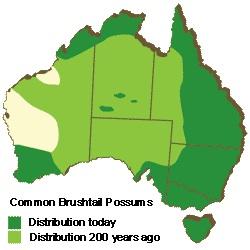 Brushtail possum distribution map. Credit: Possum Centre