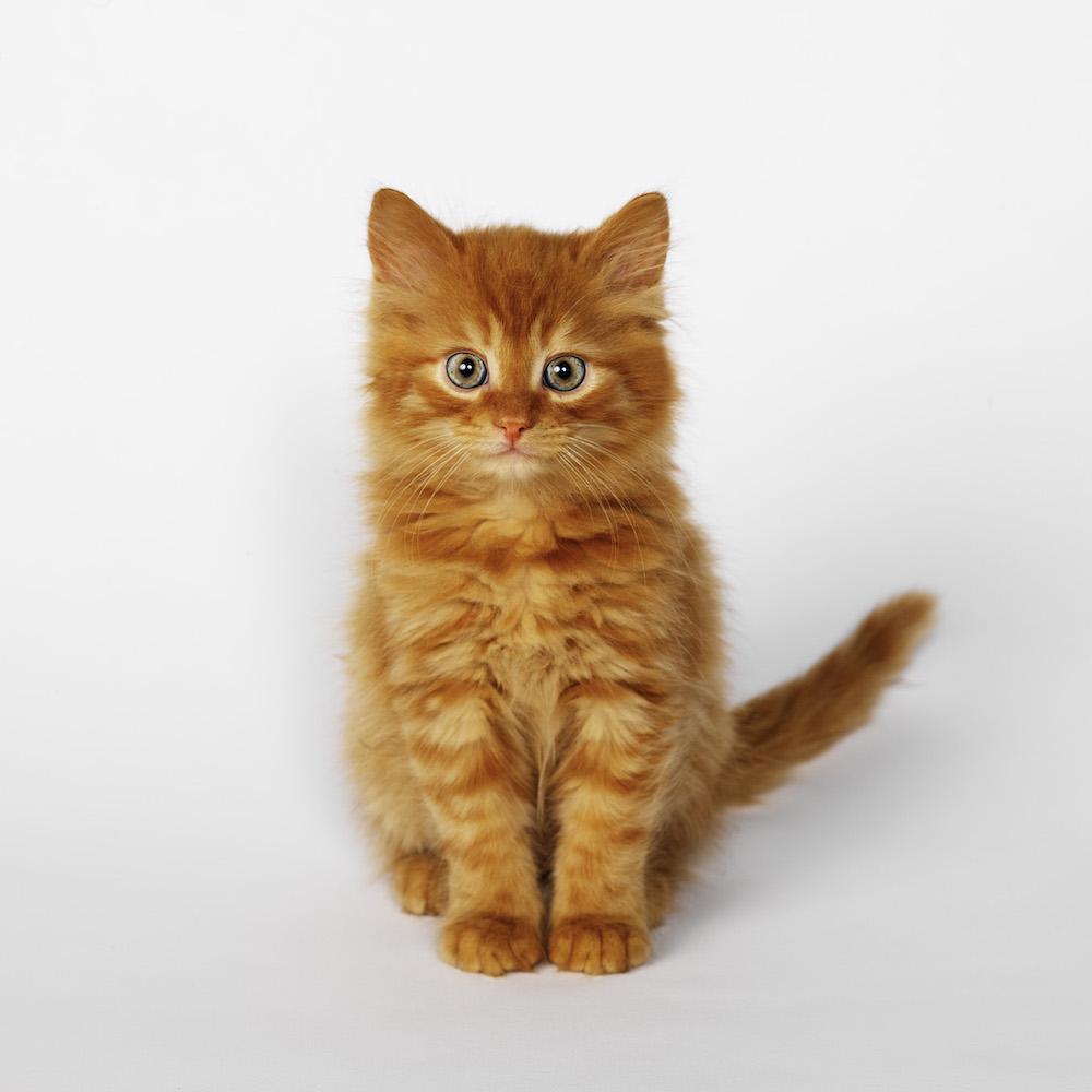 Cute kitten. Photo Animal Ark