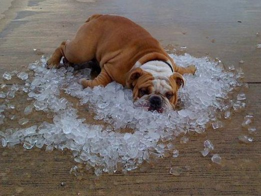 Hot dog on ice. Photo: Facebook Newstalkkit.com