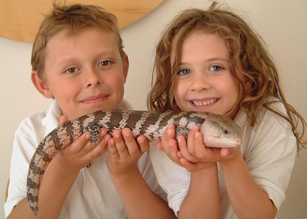 Kids holding blue tongue lizard. Photo: Animal Ark