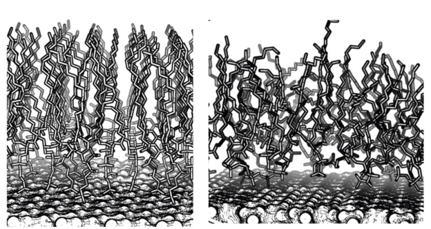 Layers of lipid molecules - well ordered on left, disordered on right. Diagram Joe Baio