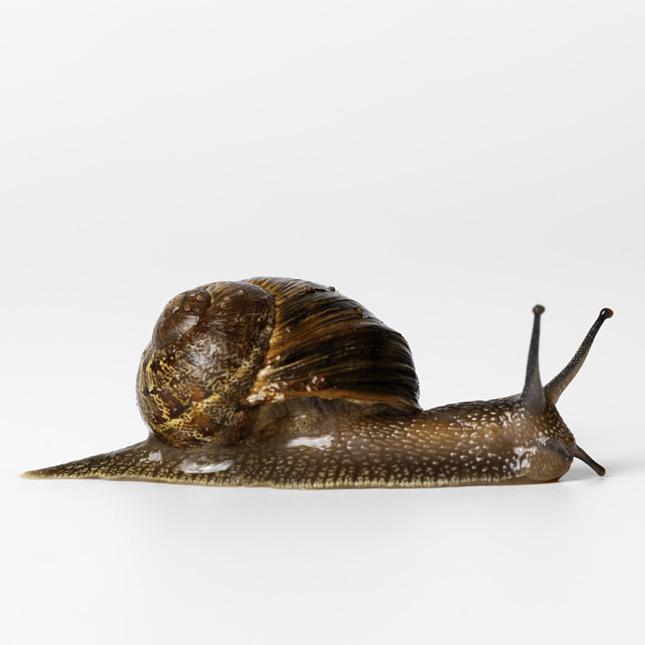 Snail. Photo Animal Ark