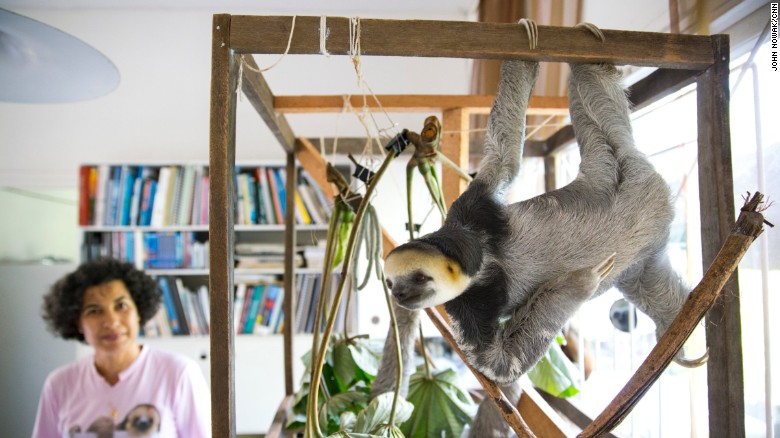 Wildlife rescue, Suriname. The sloth lady - Monique pool. Photo John Nowak, CNN