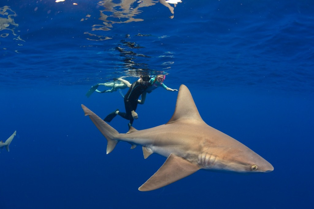 Andy Corbe and daughter swimming with a Galapagos shark, photo Juan Oliphant.