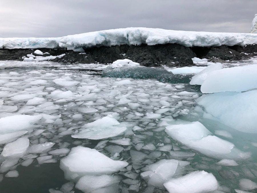Bergy bits ice Antarctica. Photo: Animal Ark