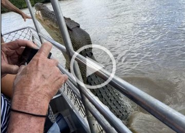Big Boy tries to bite the hand that feeds. Dominator the crocodile, Adelaide River, NT. Photo Animal Ark