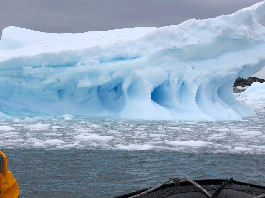 Blue iceberg, Antarctica. Photo: Animal Ark