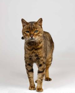 Cat. Photo Animal Ark