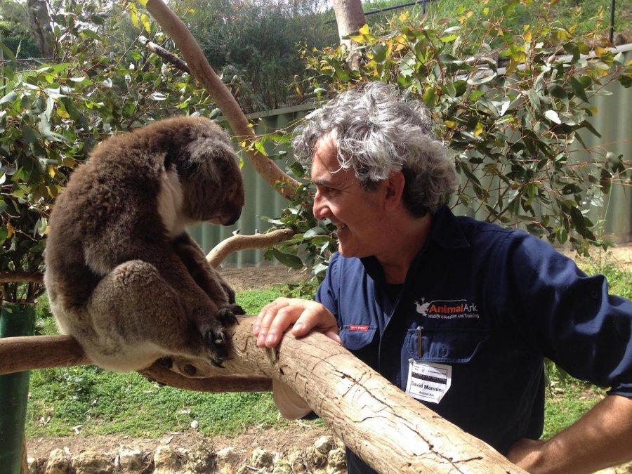 David Manning with koala. Photo: Animal Ark