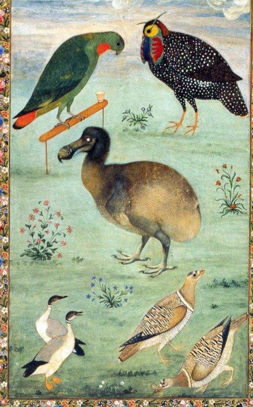 Dodo amongst Indian birds, image Ustad Mansur, 1625. Wiki Commons