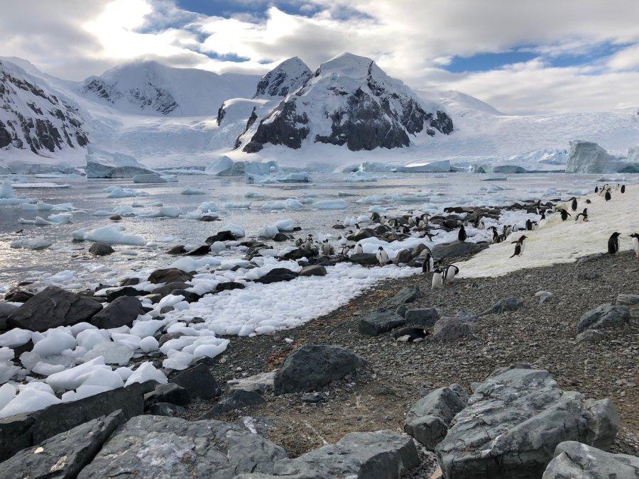 Gentoo penguin colony, Antarctic Peninsula Island. Photo: Animal Ark