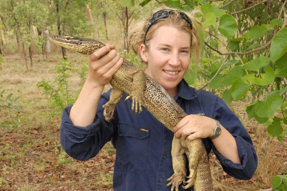 Georgia Ward-Fear about to release floodplain goanna fitted with tail transmitter. Photo DPAW/ABC