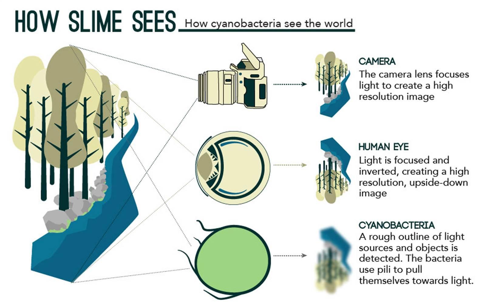 How slime sees image. Source: eLife on sciencealert.com