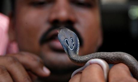 Indian snake handler holding cobra. Photo Asit Kumar AFP Getty Images