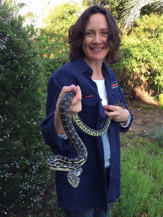 Jenny with rescued carpet python. Photo Animal Ark.