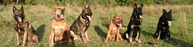 K9s for Conservation dogs. Photo: SOUL Trust