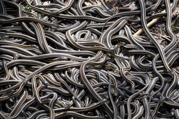 Narcisse snake dens. Photo: Stve on Flickr Creative Commons