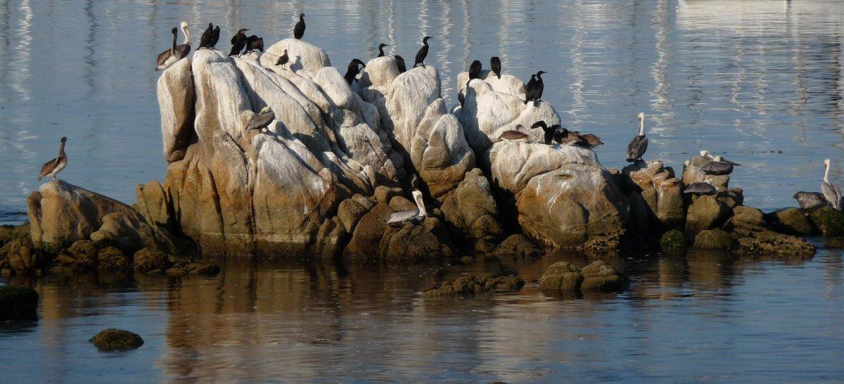 Rock at Monterey with birds and their crap. Photo: Mrmariokartguy, Wikimedia Commons
