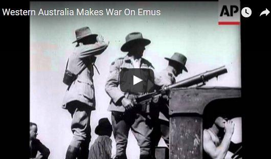 Western Australia makes war on emus. Photo: atlasobscura.com