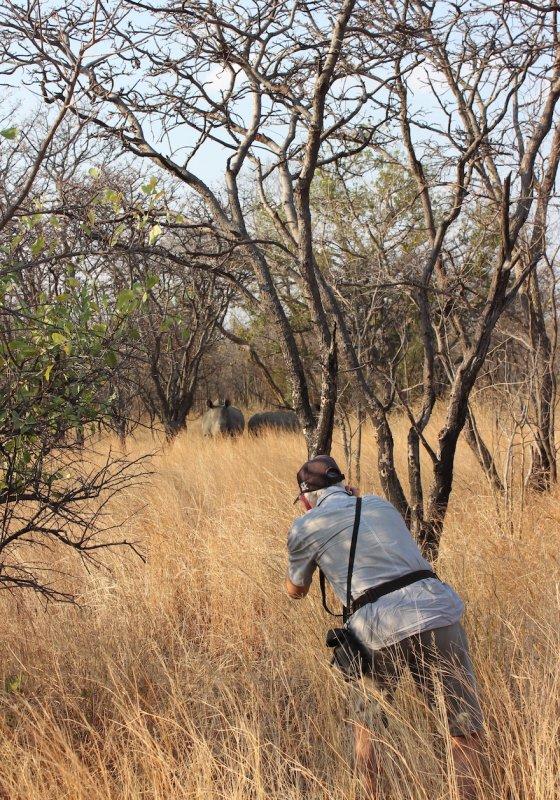 Wild rhino at Matopo National Park, Zimbabwe. Photo: Animal Ark